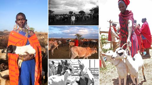 Kenyan Holding Goat